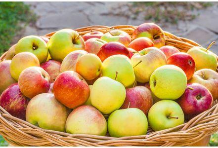 Miam des pommes